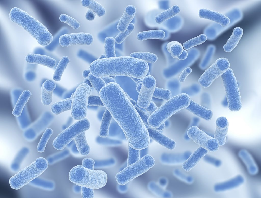 bacterie maladie noscomiale