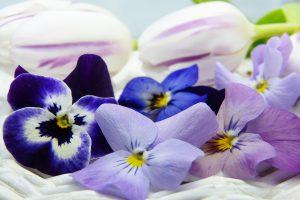 phytothérapie par les plantes