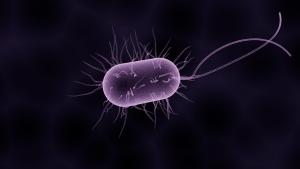La bactérie Pseudomonas aeruginosa
