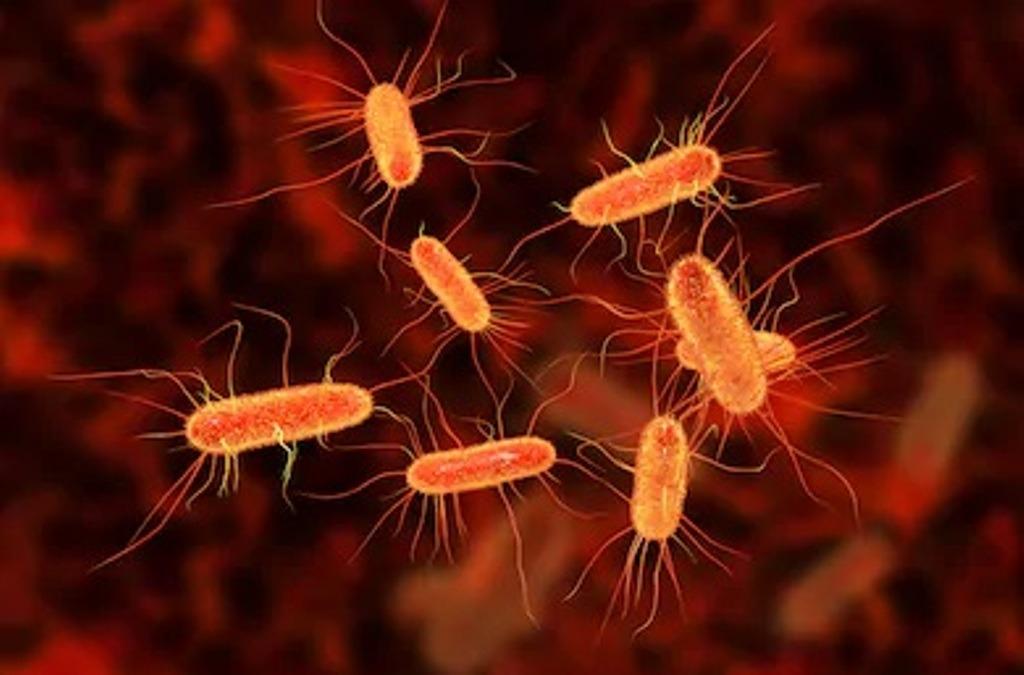 microorganismes pathogènes